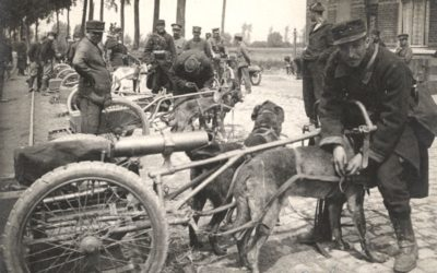 A man's best friend in the trenches